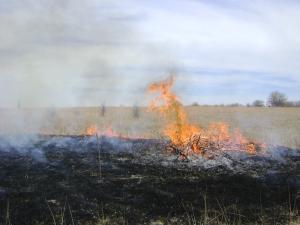 Chapman Fire